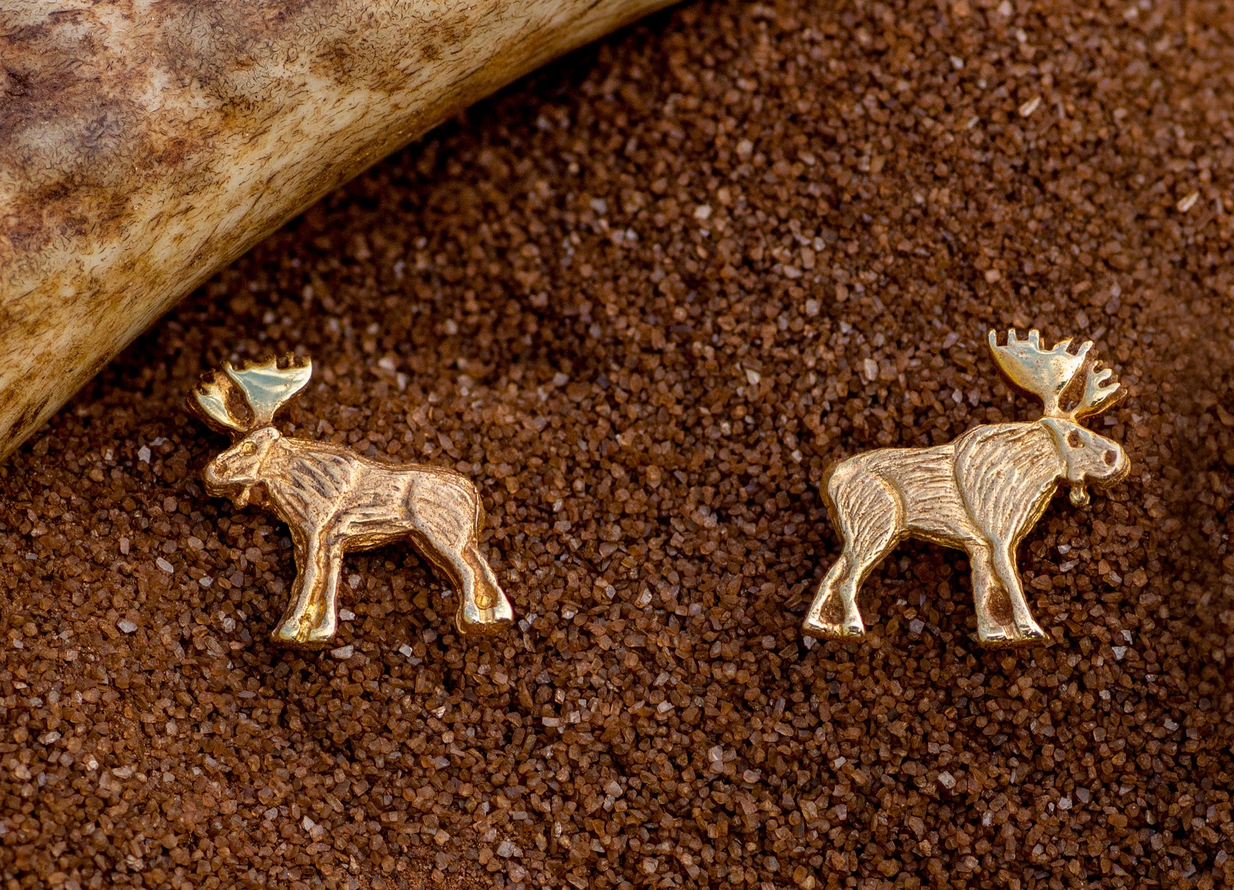 Bull Moose Earrings in 14Kt Yellow Gold.